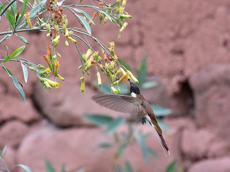 aves-huacarpay